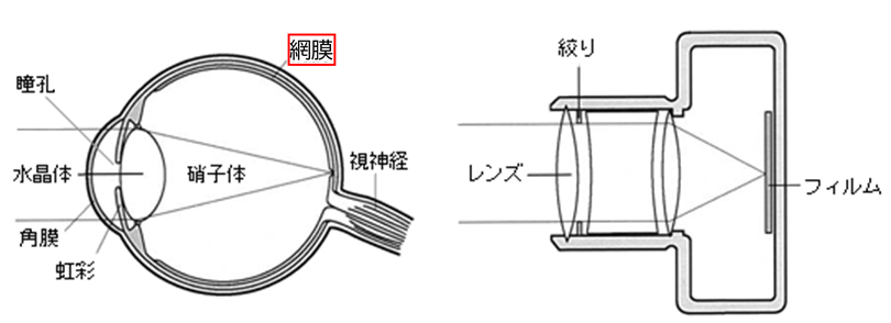眼球とカメラ